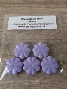 Waxmelt Bloemen